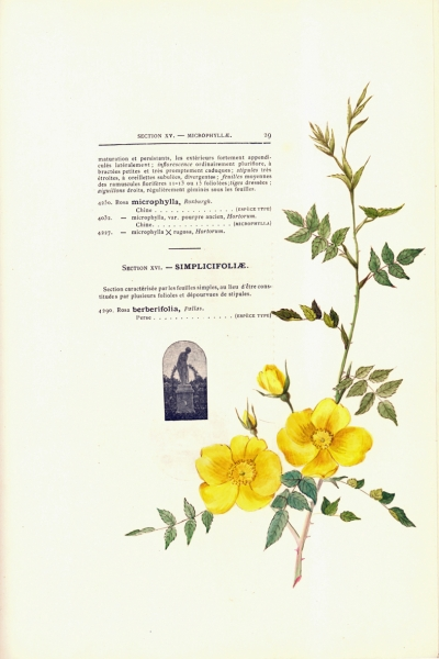 1900-GE-RdlH-Catalogue-Viger-p029a_wp