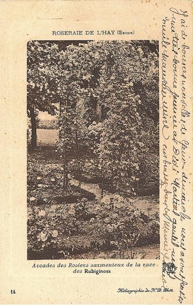 196-3©-14-ROSERAIE-DE-LHAY-SEINE-Arcade-des-Rosiers-sarmenteux-de-la-race-des-Rubiginosa_wp