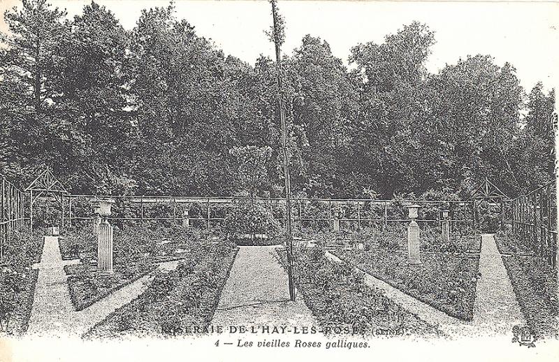 207©-4-ROSERAIE-DE-LHAY-LES-ROSES-Les-vieilles-roses-galliques_wp
