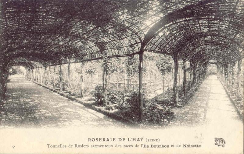058-2©-9-ROSERAIE-DE-LHAY-SEINE-Tonnelle-de-Rosiers-sarmenteux-des-races-de-lIle-Bourbon_wp
