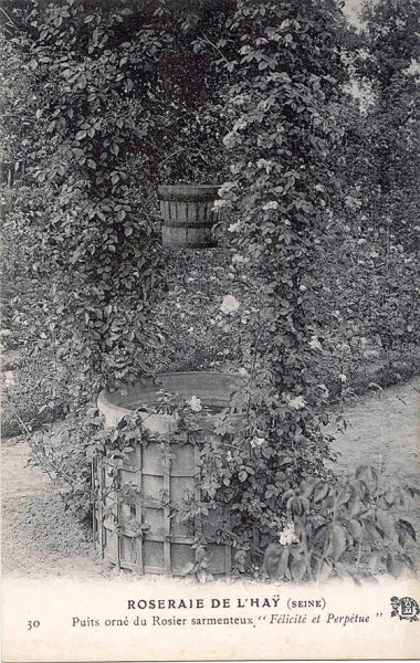 105-1©-30-ROSERAIE-DE-LHAY-SEINE-Puits-orné-du-Rosier-sarmenteux-Félicité-et-Perpétue_wp