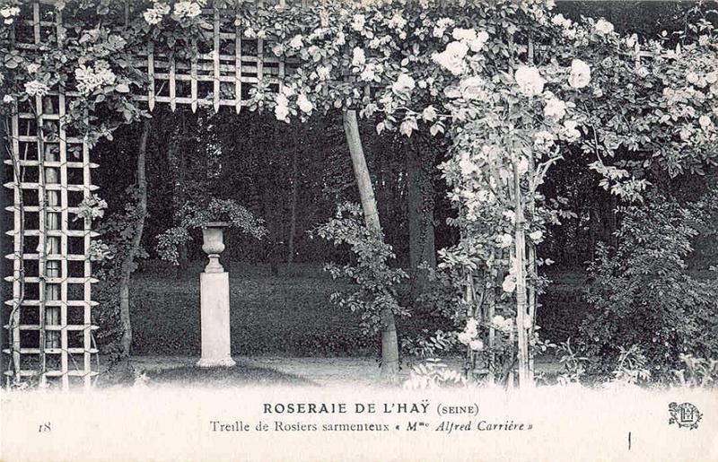 137©-18-ROSERAIE-DE-LHAY-SEINE-Treille-de-Rosiers-sarmenteux-Mme-Alfred-Carrière_wp
