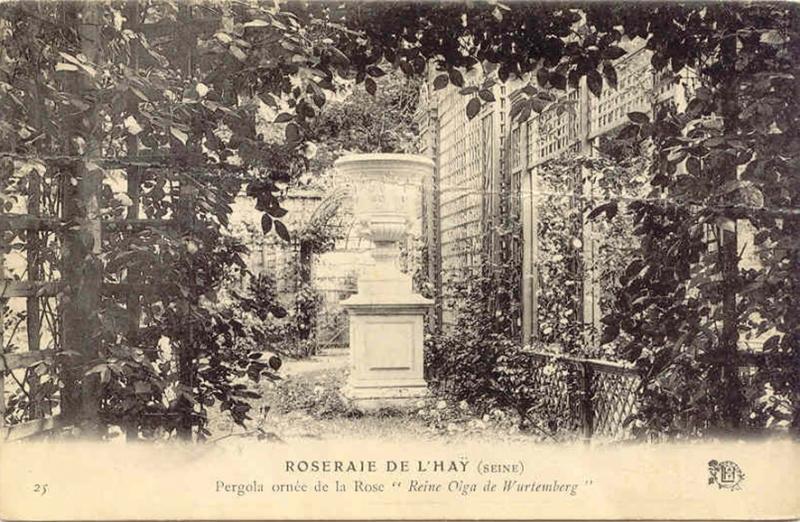 140©-25-ROSERAIE-DE-LHAY-Seine-Pergola-ornée-de-la-Rose-«Reine-Olga»_wp