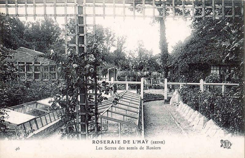 154©-46-ROSERAIE-DE-LHAY-SEINE-Les-Serres-de-semis-de-Rosiers_wp