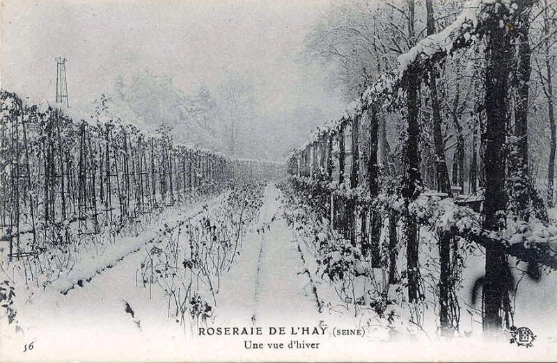 156©-56-ROSERAIE-DE-LHAY-SEINE-Une-vue-dhiver-Copie_wp