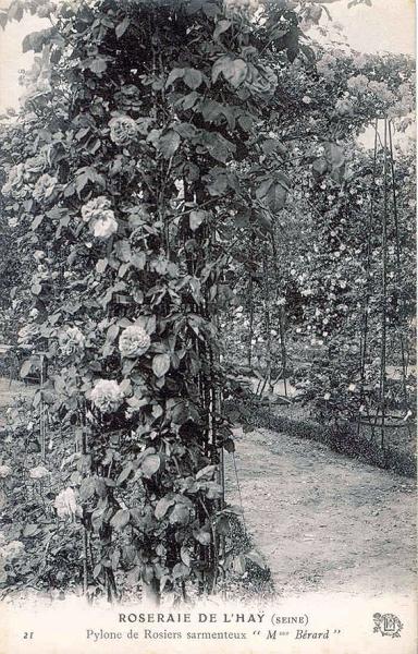 176©-21-ROSERAIE-DE-LHAY-SEINE-Pylone-de-Rosiers-sarmenteux-Mme-Bérard_wp