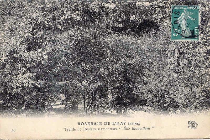 178©-20-ROSERAIE-DE-LHAY-LES-ROSES-SEINE-Treille-de-Rosiers-sarmenteux-Elie-Beauvillain_wp