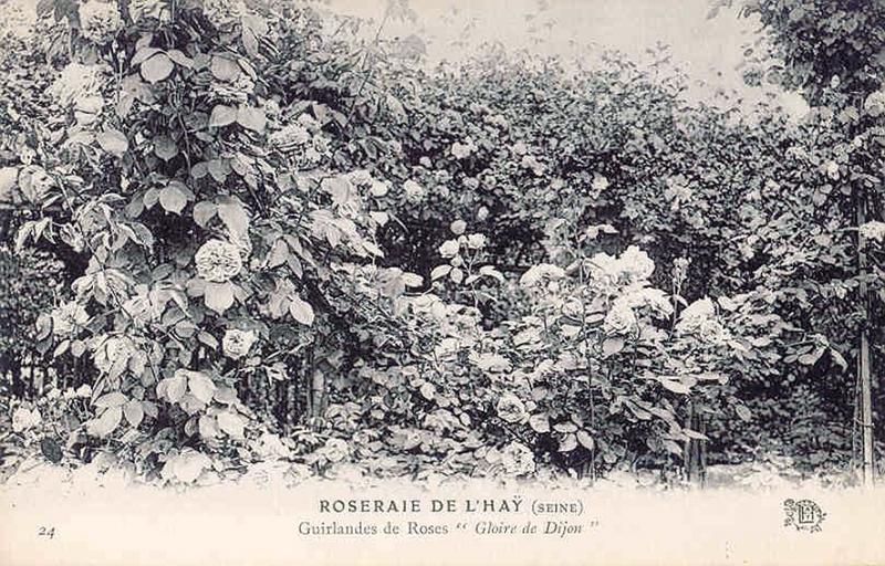 179©-24-ROSERAIE-DE-LHAY-SEINE-Guirlandes-de-Roses-Gloire-de-Dijon_wp