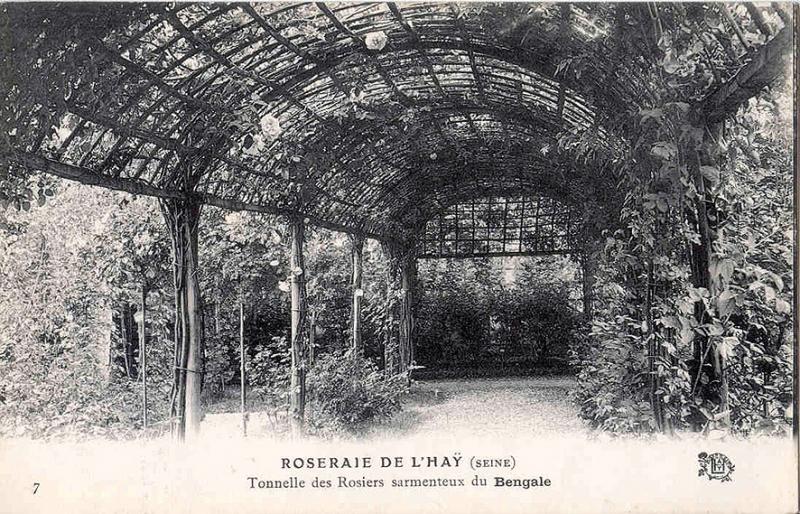 186©-07-ROSERAIE-DE-LHAY-SEINE-Tonnelle-des-Rosiers-sarmenteux-du-Bengale_wp