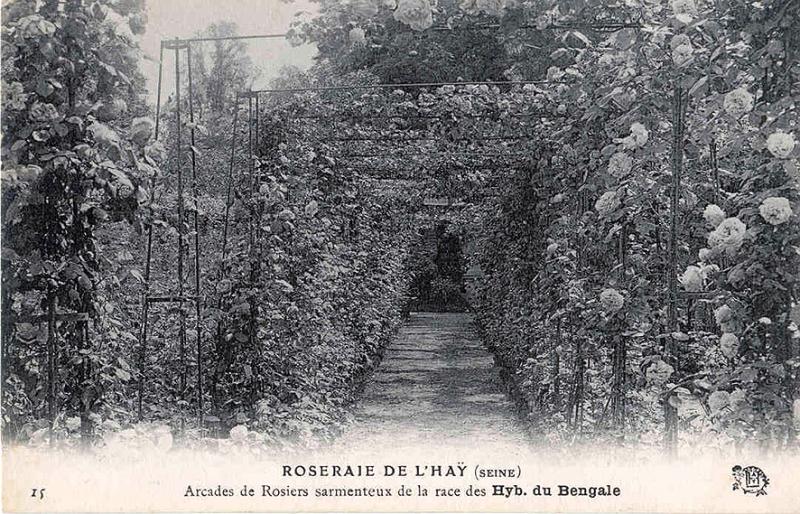 188-1©-15-ROSERAIE-DE-LHAY-LES-ROSES-SEINE-Arcades-de-Rosiers-sarmenteux-de-la-race-des-Hyb-du-Bengale_wp