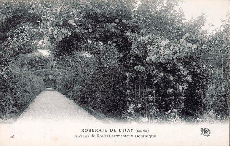 189©-16-ROSERAIE-DE-LHAY-SEINE-Arceaux-de-Rosiers-sarmenteux-Botanique_wp