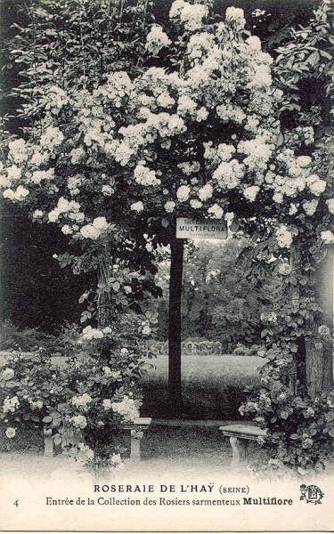 191©-4-ROSERAIE-DE-LHAY-SEINE-Entrée-de-la-collection-des-Rosiers-sarmenteux-Multiflore_wp