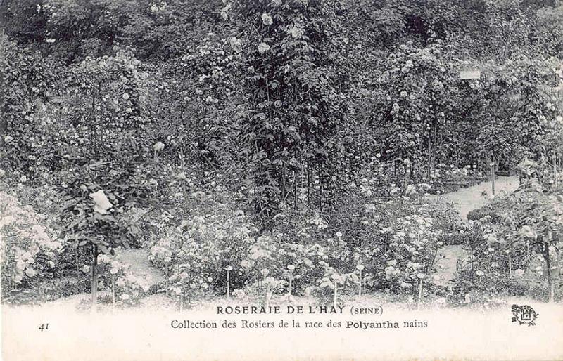 193©-41-ROSERAIE-DE-LHAY-SEINE-Collection-des-Rosiers-de-la-race-des-Polyantha-nains_wp