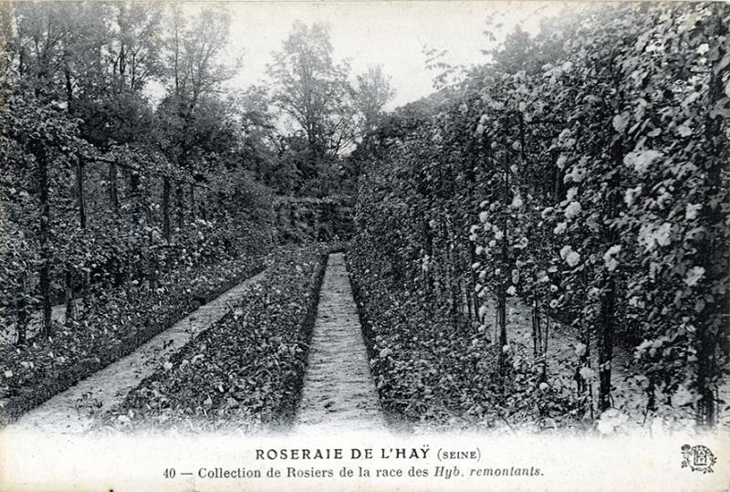 194-2©-40-ROSERAIE-DE-LHAY-SEINE-Collection-de-Rosiers-de-la-race-des-Hyb-remontants_wp