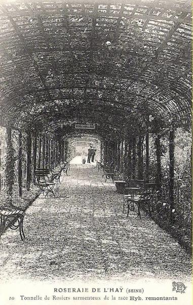 195©-10-ROSERAIE-DE-LHAY-LES-ROSES-Seine-Tonnelle-de-Rosiers-sarmenteux_wp