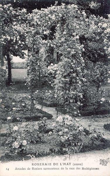 196-1©-14-ROSERAIE-DE-LHAY-SEINE-Arcade-de-Rosiers-sarmenteux-de-la-race-des-Rubiginosa_wp