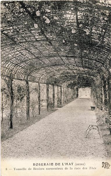 198-2©-8-ROSERAIE-DE-LHAY-SEINE-Tonnelle-de-Rosiers-sarmenteux-de-la-race-des-Thés_wp