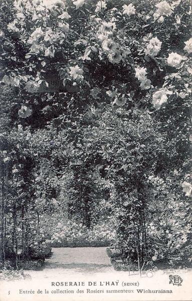 200©-5-ROSERAIE-DE-LHAY-SEINE-Entrée-de-la-collection-des-Rosiers-sarmenteux-Wichuraiana_wp