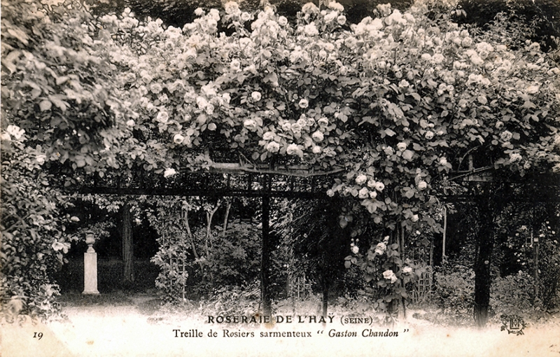 372©-19-ROSERAIE-DE-LHAY-SEINE-Treille-de-rosiers-sarmenteux-Gaston-Chandon_wp
