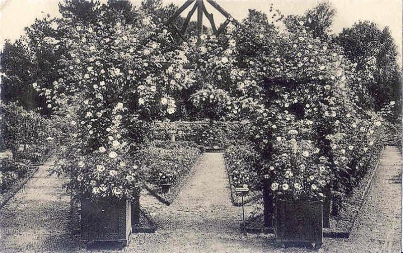 La Collection des Roses anciennes