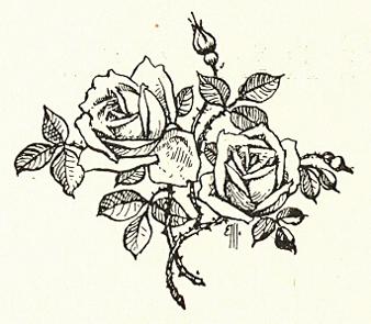 Roses de Malmaison - p02_wp