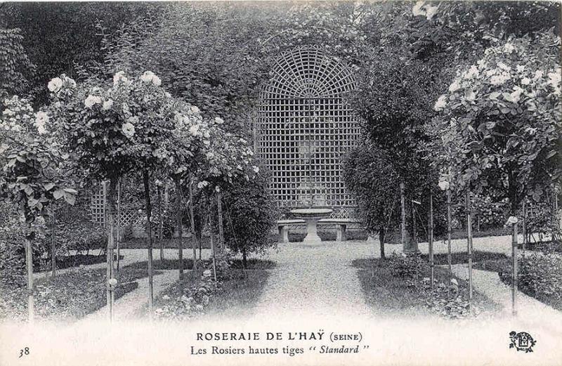 026©-38-ROSERAIE-DE-LHAY-SEINE-Les-Rosiers-hautes-tiges-Standard_wp