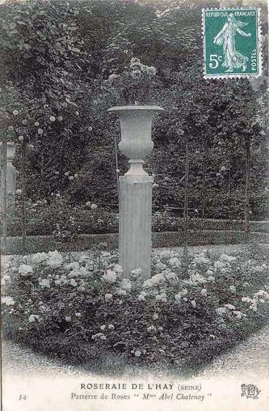 173©-34-ROSERAIE-DE-LHAY-LES-ROSES-SEINE-Parterre-de-Roses-Mme-Abel-Chatenay_wp