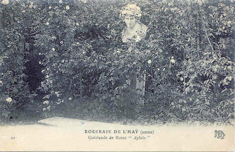 174©-22-ROSERAIE-DE-LHAY-LES-ROSES-SEINE-Guirlande-de-Roses-Aglaia_wp