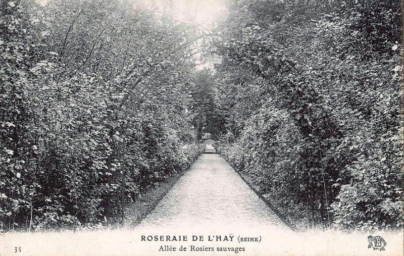 184©-35-ROSERAIE-DE-LHAY-SEINE-Allée-de-Rosiers-sauvages_wp