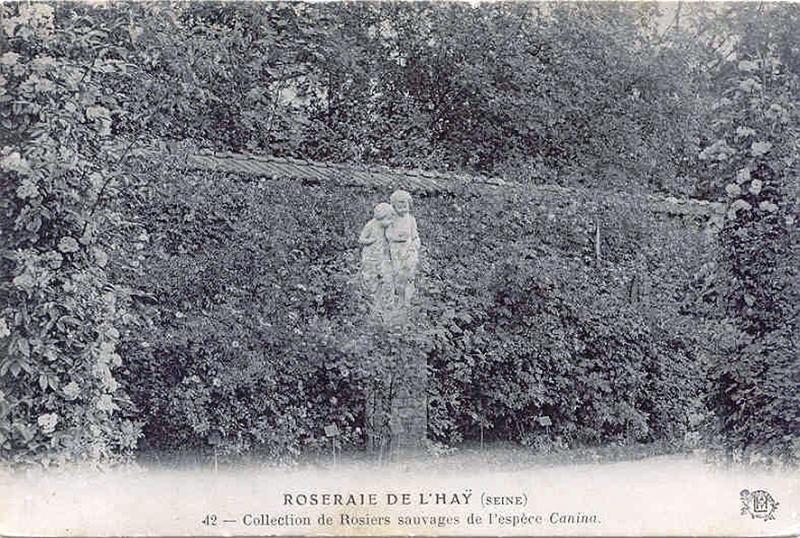 185©-42-ROSERAIE-DE-LHAY-LES-ROSES-SEINE-Collection-de-Rosiers-sauvages-de-lespèce-Canina_wp