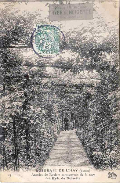 192©-13-ROSERAIE-DE-LHAY-SEINE-Arcades-de-rosiers-sarmenteux_wp