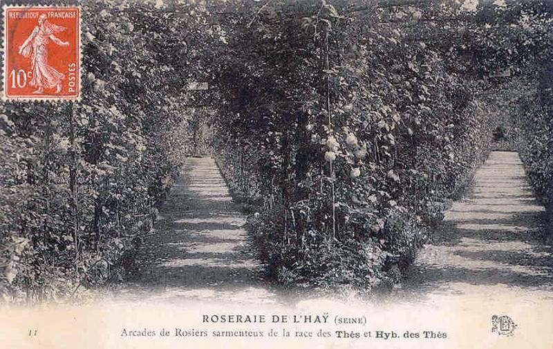 199-1©-11-ROSERAIE-DE-LHAY-SEINE-Arcades-de-Rosiers-sarmenteux-de-la-race-des-Thés-et-Hyb.-des-Thés_wp