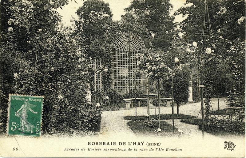 244-1©-66-ROSERAIE-DE-LHAY-SEINE-Arcades-de-rosiers-sarmenteux_wp